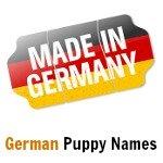 Home   Choosing Puppy Names   Y Dog Names