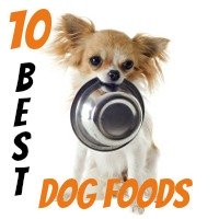 10 Best Dog Food Choices