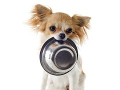 puppy with food bowl
