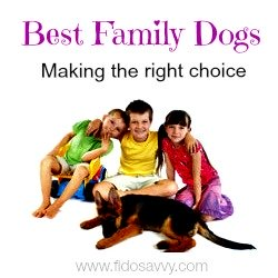 Three children and GSD puppy - best family dogs