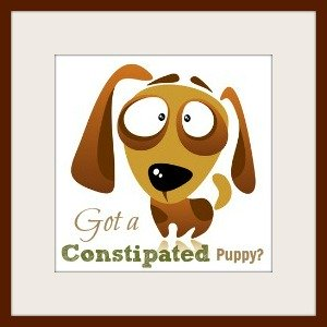 Get help for a constipated puppy