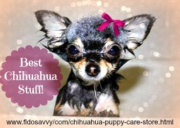 Chihuahua puppy care store.