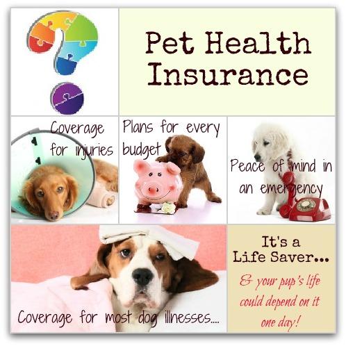 dog medical insurance infographic