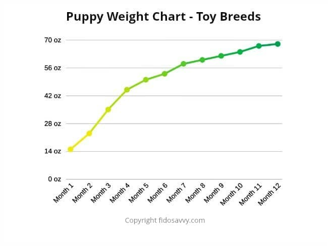 Puppy weight chart for toy and tiny dog breeds