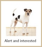 Alert and interested Terrier dog