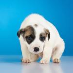 Small sad puppy