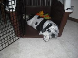 puppy sleeping in his crat