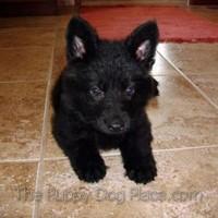 Berrin - black