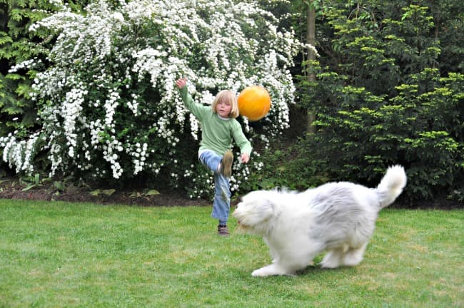Boy playing soccer with Old English Sheepdog