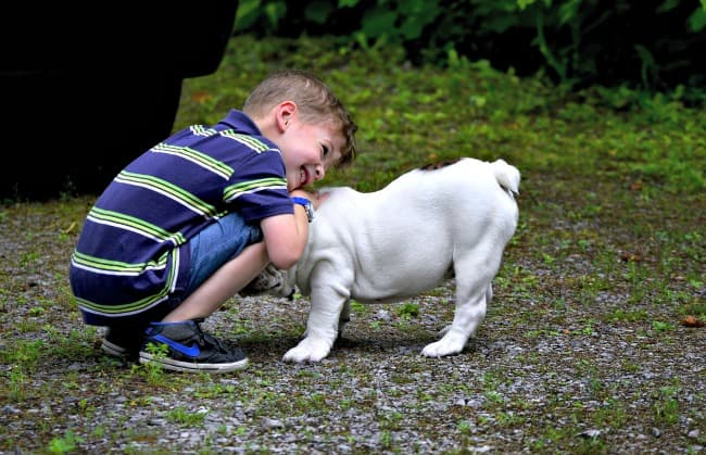 Little boy hugging English Bulldog puppy