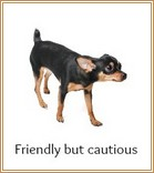 Friendly, cautious dog body language
