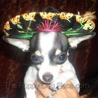Chica the chi in national costum
