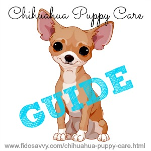 Chihuahua Puppy Care Guide