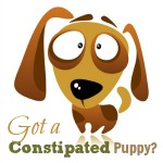 puppy consipation