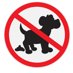 coronavirus is transmitted by dog feces