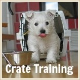 Puppy crate training tips & advice