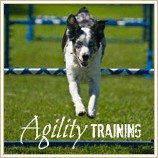 All about dog agility