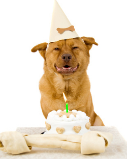 Whether Its Your Puppys First Birthday Or Older Dogs Umpteenth Youll Find All The Dog Products You Need For Party Animal Right