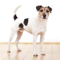Dog body language explained
