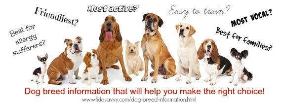 dog breed information