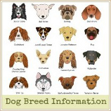 List Of Best Family Dogs