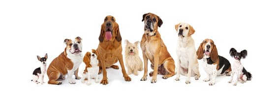 Dogs of different breeds sitting in a row