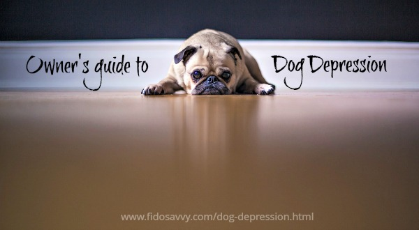 Owners guide to dog depression