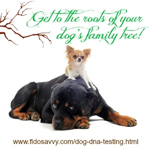 About Dog DNA testing