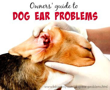 Dog Ear Problems - From Causes To Cures