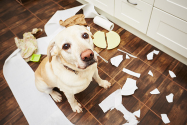 Dog eating trash
