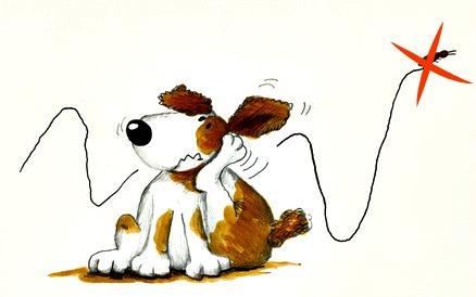Dog flea allergy relief - kill the fleas!