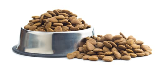 Dog bowl filled with dry dog food with extra food piled beside it