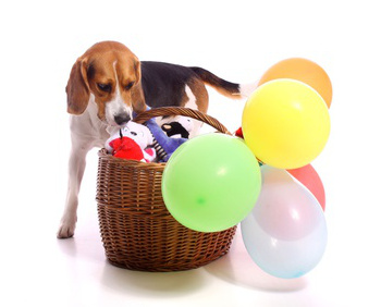 The Perfect Dog Gift Basket - Build Yours Here!