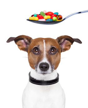 About dog pain medication