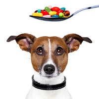 Ivermectin chewable tablets for dogs