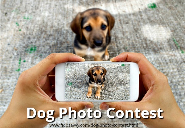 Fidosavvy dog photo contest