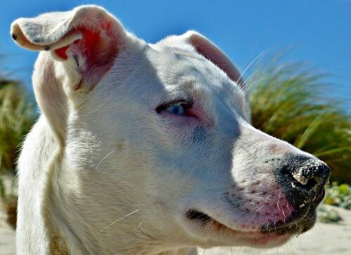 White dog at the beach