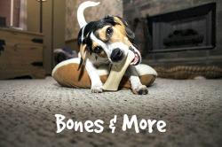 Dog chewing on a bone