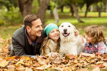 Smartest dog breeds - Golden Retriever
