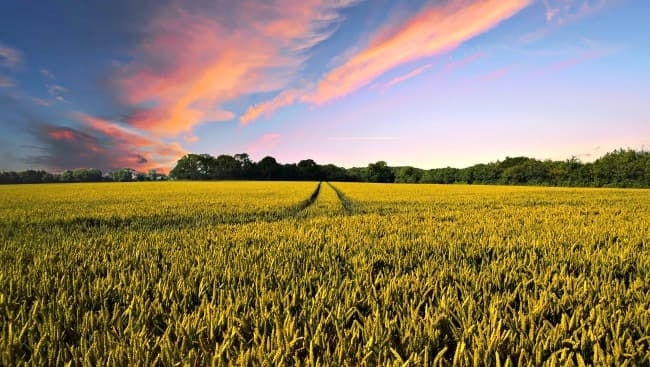 Farmland used for growing organic crops at sunset