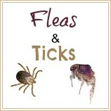 about fleas and ticks