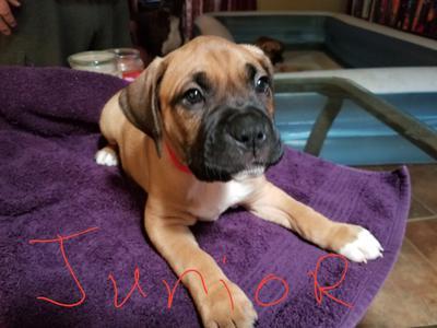 Junior at 3 weeks