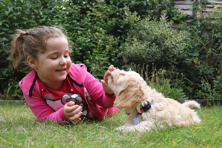 Little girl playing with new puppy