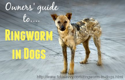 Guide to ringworm in dogs