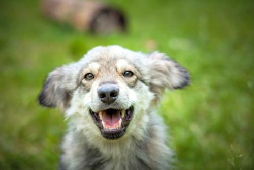 Happy mixed breed puppy
