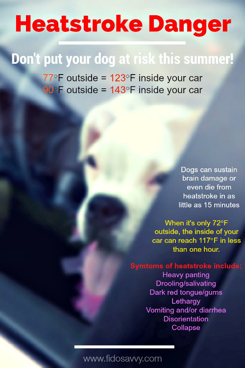 Heat stroke danger for dogs in cars