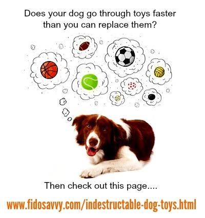 Dog with indestructible dog toys