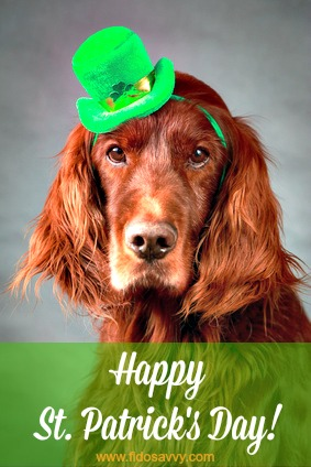 Irish Setter celebrating St. Patrick's Day