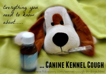 Everything you need to know about Kennel Cough in Dogs