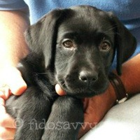 Best Dog Breeds For Ch...